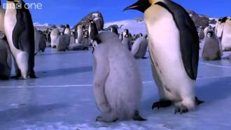 Penguins: Spy in the Huddle Extrait (3) VO